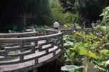 澳门卢廉若花园九曲桥超清大图