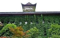 南京大学老建筑别样夏装(组图)